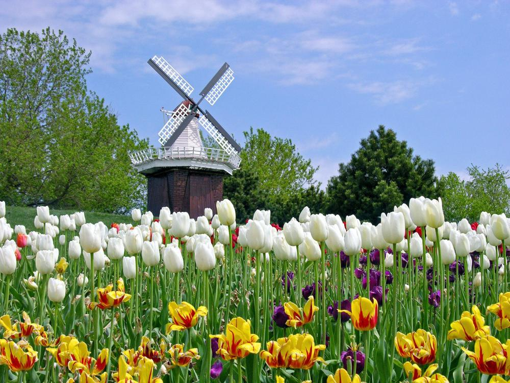 Traveling enjoy the season in the state four seasons for What season are tulips