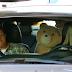 'Ted 2', com Mark Wahlberg e Amanda Seyfried, ganha primeiras fotos