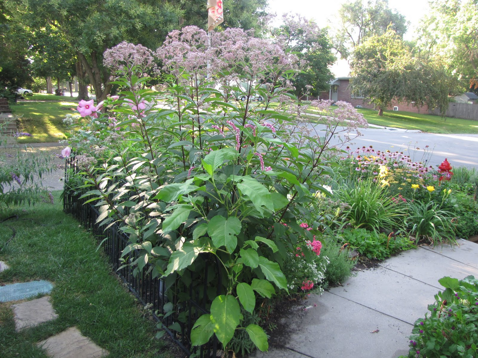 A Corner Garden July 2011