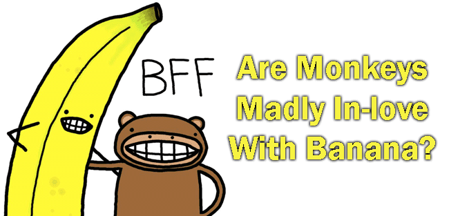 Are Monkeys Madly In-love With Banana?