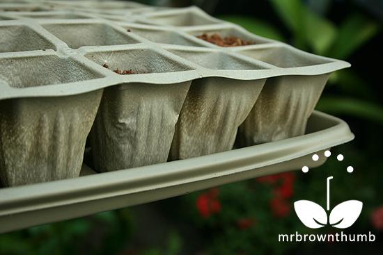 Biodegradable seed starter