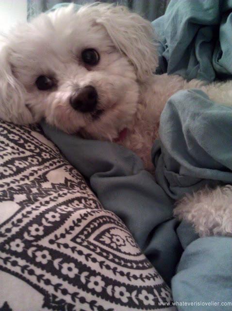 Cutest Dog Ever
