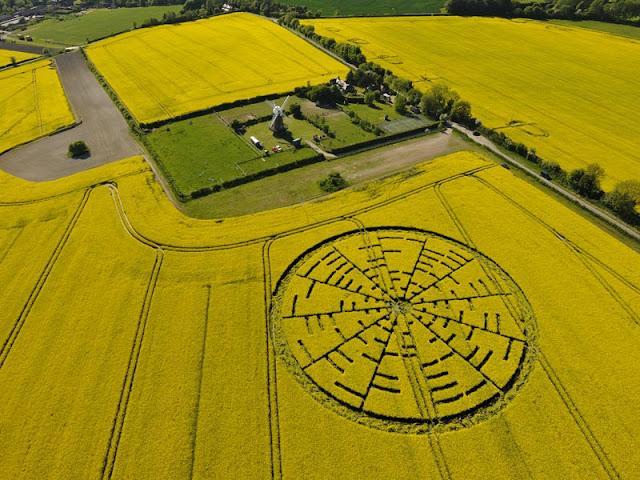 Crop Circles 2012 - Página 3 Foto+1