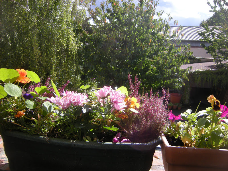 Mon jardin en le de france jardini res d 39 automne for Jardiniere d automne