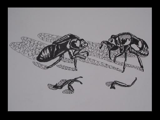 Two cicada shells 'fighting'.