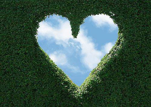 imágen de corazon
