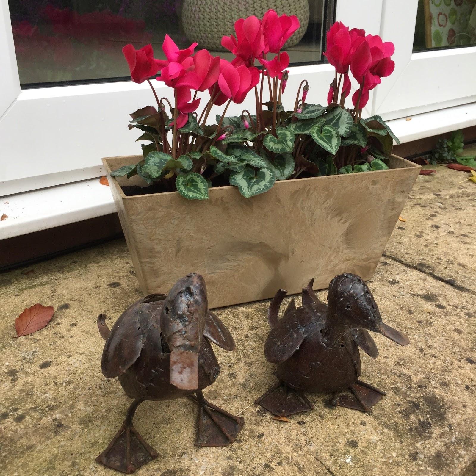 Winter Flowers For Garden Planters Garden Tea Cakes And Me