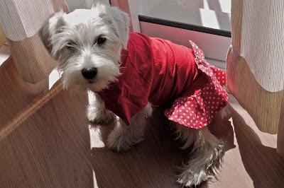 foto Leica de vestido vermelho