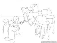 Gambar Anak-Anak Memberi Makan Unta