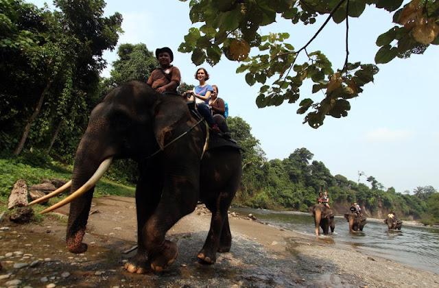 Gajah Sumatera Dikhawatirkan Turun Gunung Karena Habitatnya Terbakar