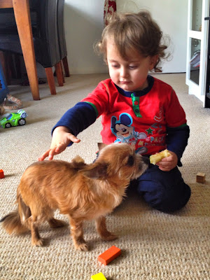 366 Project, dog, toddler, pet, chihuahua, parenting
