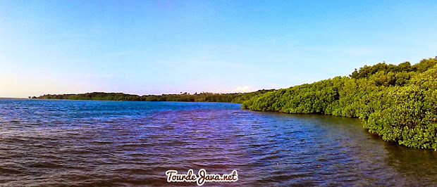 hutan mangrove pantai bama