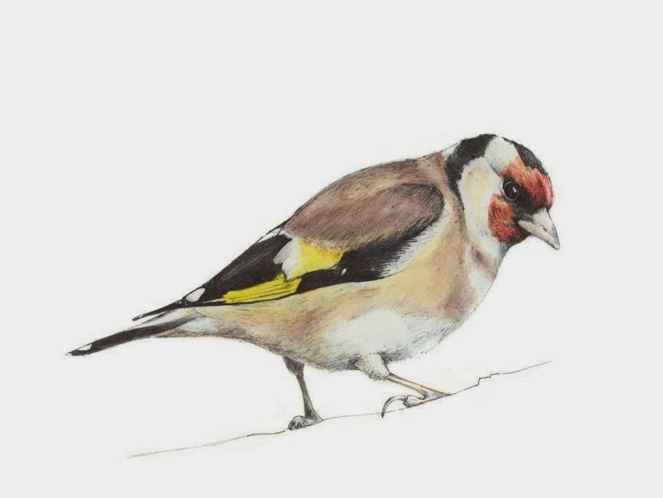 Handmade framed Goldfinch print | Objets de Désir