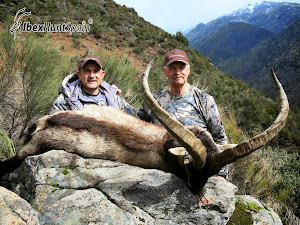 GREDOS SPANISH  IBEX | HUNTING IBEX IN SPAIN