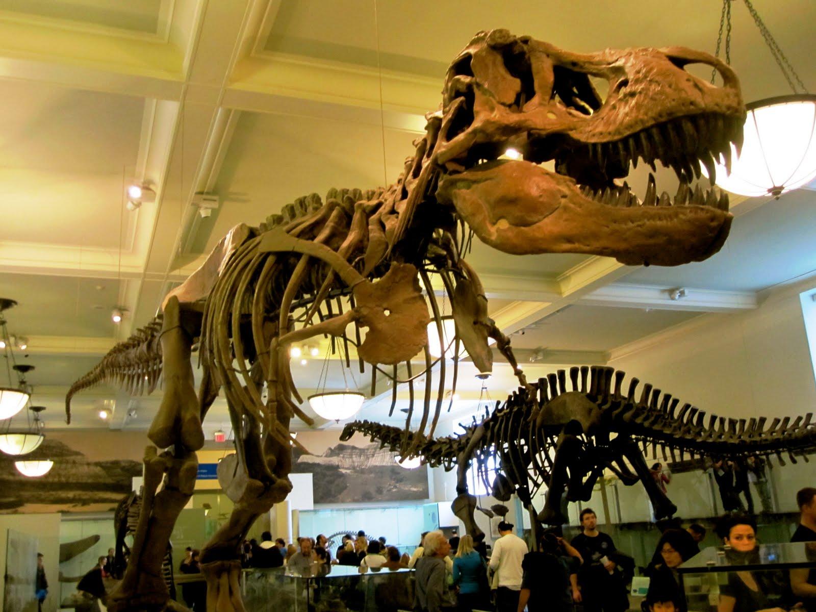 Jfk Airport To Natural History Museum