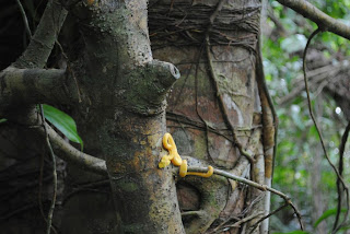 oropel snake in cahuita costa rica