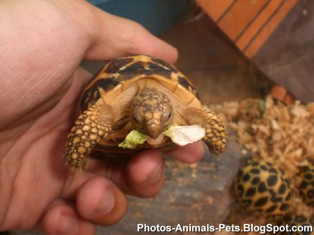 Photos pet baby turtle Photos-Animals-Pets.BlogSpot.com