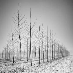 Пейзажи из деревьев