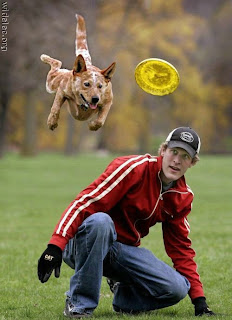 flying dog frisbee