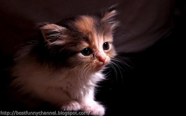 Funny little kitten.