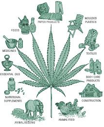 Usefull plant