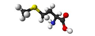 Metionin (Methionine), Sumber, Fungsi, Manfaat, Dosis dan Efek samping