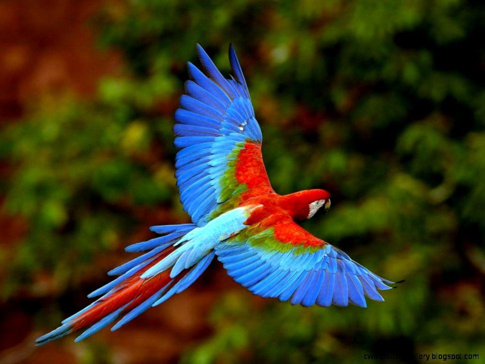 Rainforest Animals   Lessons   TES