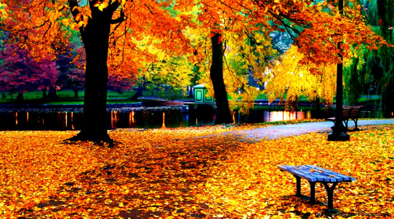 Fall Leaves Background Wallpapers  WIN10 THEMES