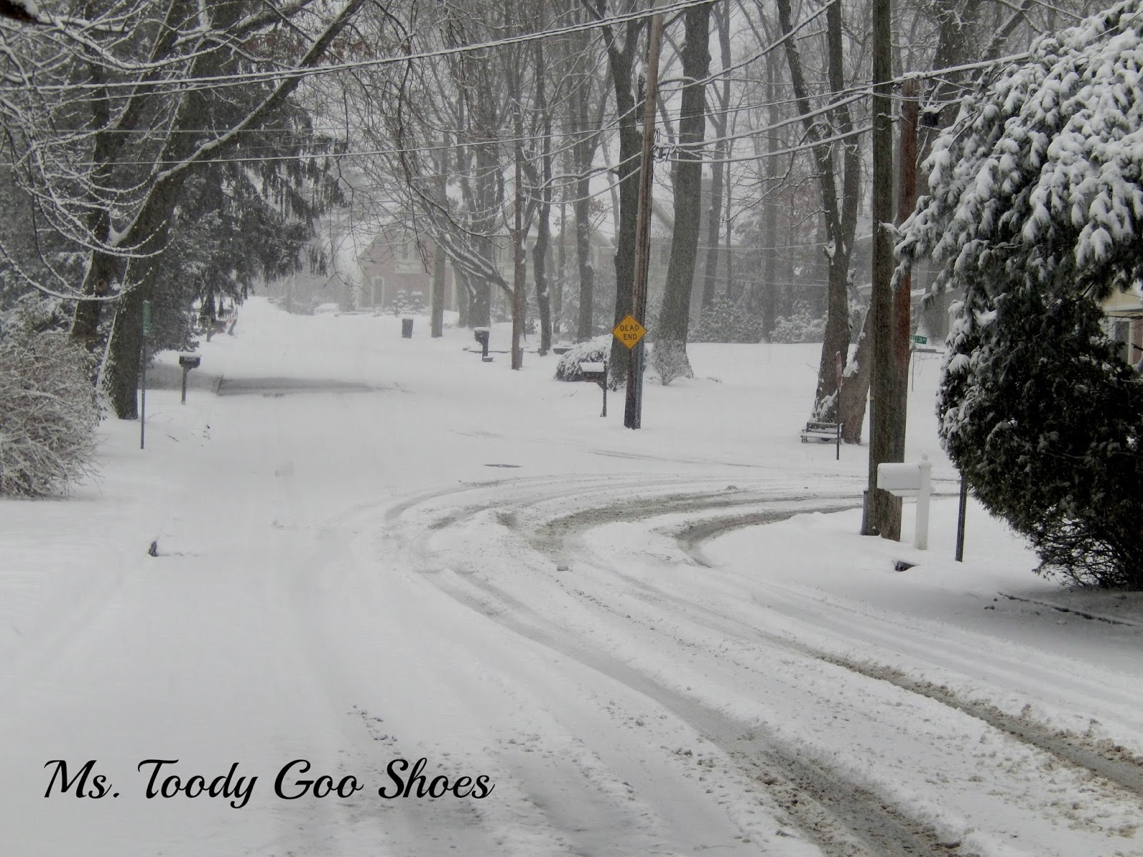 February Photo Diary --- by Ms. Toody Goo Shoes