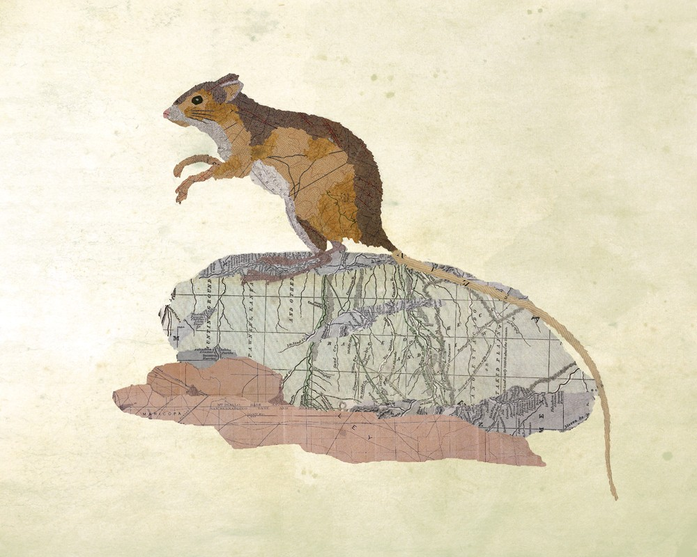 09-Wood-mouse-Jason-LaFerrera-Cartography-Shaped-to-make-Map-Animals-www-designstack-co