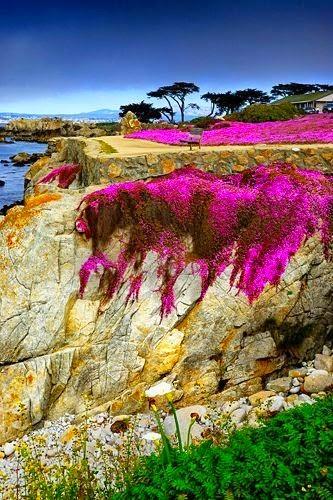 Dreamy Nature Stunning Nature