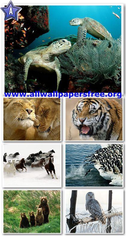 60 Amazing Animals Wallpapers 1280 X 1024 [Set 21]