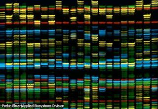 Mapa informático del genoma humano. Imagen: Perkin Elmer