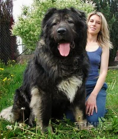 5 Biggest dogs with their owners