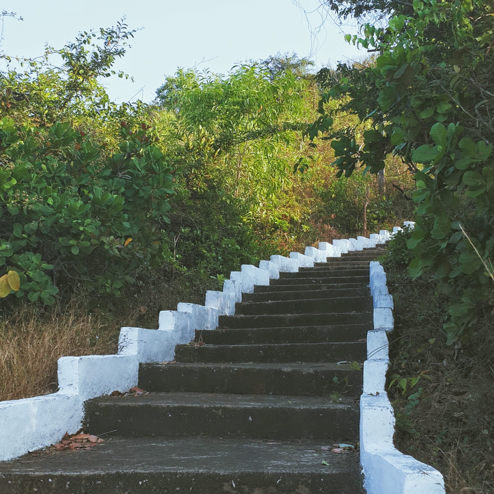 Concrete staircase in the midst of a green forest that leads to a mountain top