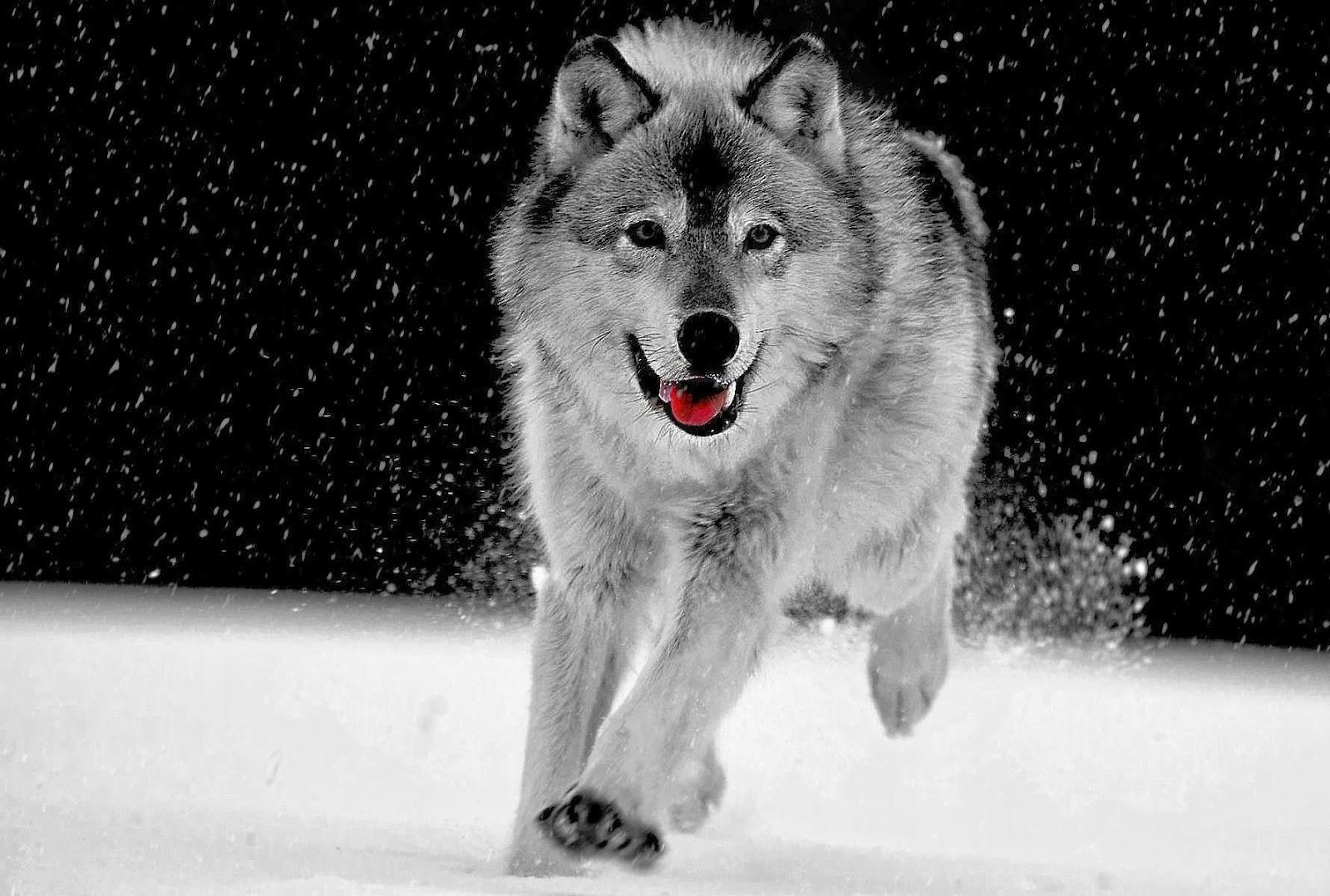 Brujita de cocina wolf spirit - Cocinas wolf ...