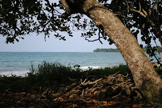 national park path, trees, sea, cahuita, costa rica