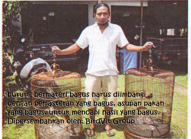 Benarkah persilangan Murai Medan dan Borneo dapat menghasilkan
