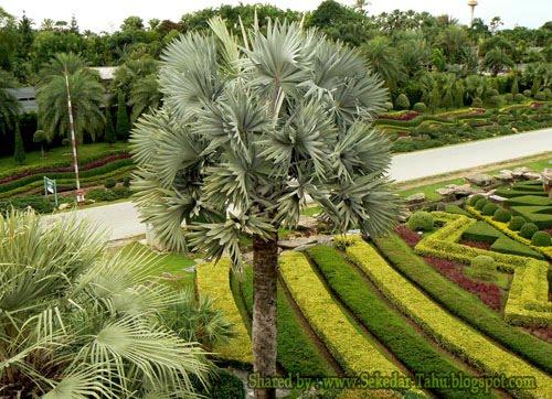 Nong Nooch Tropical Garden-4