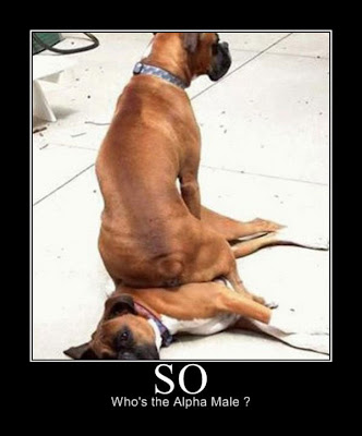 funniest dog pictures