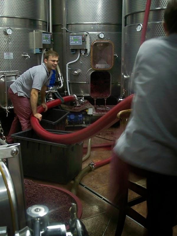 winemaking tour at ascheri in piedmont