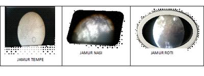 Jamur tempe Jamur Roti Jamur Nasi