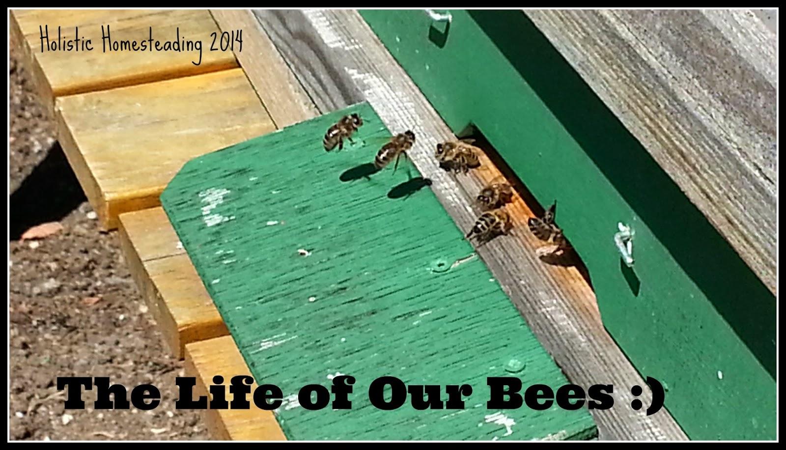 Beekeeping 2014