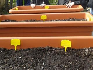 coltivazione didattica in contenitori