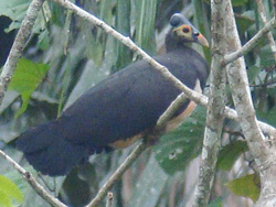 sulawesi birds watching tour