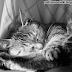 Dzień kota - 17 luty