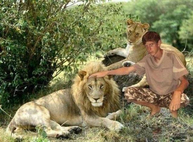 Montagem mal feita de menino com leão