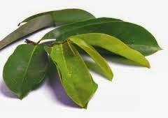 khasiat daun sirsak untuk atasi penyakit diabetes