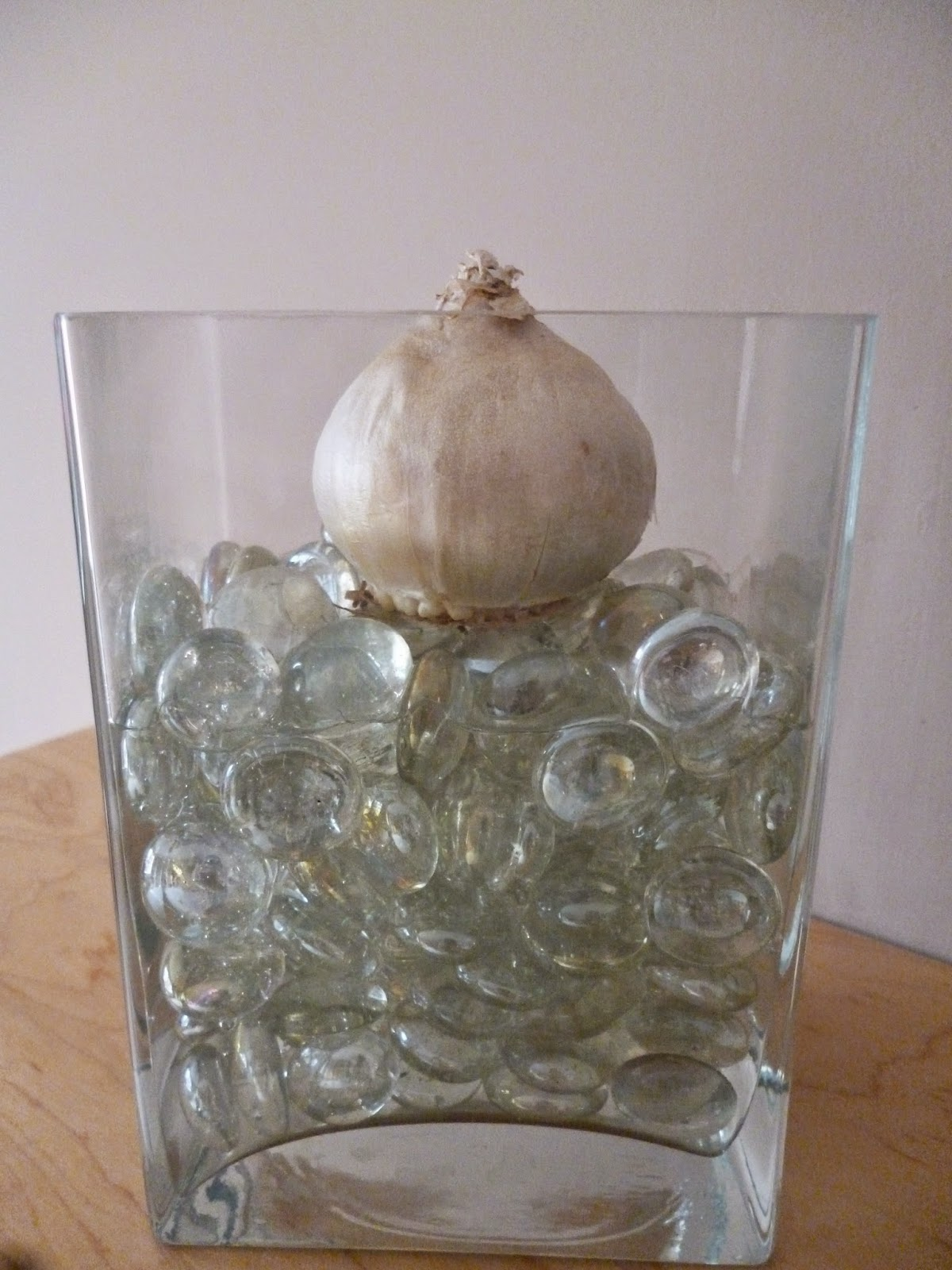 Planting hyacinths for christmas make your own hyacinth vase how to grow hyacinth bulb vase for christmas reviewsmspy