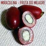 Conheça a Fruta do Milagre
